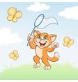 Cat is catching butterflies on meadow vector image vector image
