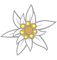 edelweiss flower vector image vector image