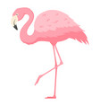 flamingo standing on one leg flat vector image