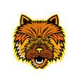 norwich terrier mascot front vector image vector image