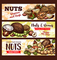 sketch banners of nuts and beans vector image vector image