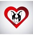 pet service design vector image vector image