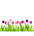 tulip spring banner isolated vector image vector image