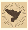 dove vintage pigeon vector image vector image