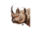 rhino watercolor wildlife animal vector image