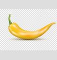 fresh yellow hot chili pepper kitchen organic vector image vector image