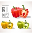 Red yellow and green bell peppers vector image