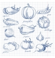 Vegetables doodle ink on notebook sheet in cell vector image