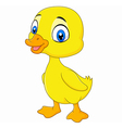 Cute baby duck posing isolated on white background vector image vector image