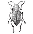 elmis beetle vintage vector image vector image