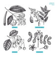 aromatic and medicinal plant set vector image vector image