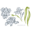 collection of hand drawn pastel iris vector image vector image