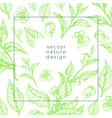 design nature template vector image