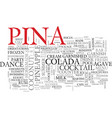 pina word cloud concept vector image