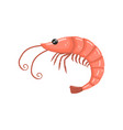 shrimp fresh seafood cartoon vector image