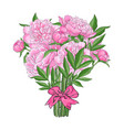 bouquet of pink peony flowers tied with ribbon vector image vector image