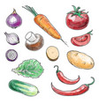 colored sketch hand drawn vegetables collection vector image vector image