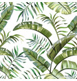 tropical leaves seamless white background vector image
