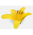 colorful blossoming yellow naturalistic lily vector image vector image