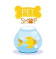 pet shop cute fish in glass bowl domestic cartoon vector image vector image