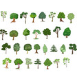 set trees various plants isolated on white vector image
