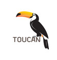 toucan birb design on white background wild vector image