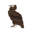 griffon vulture in the white background with vector image vector image