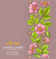 wild rose flowers background vector image vector image
