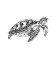 black and white hand drawn sea turtle vector image