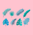 set of isolated flat leaves palm exotic on vector image