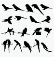 silhouettes of parrot vector image vector image