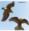 two realistic golden eagles vector image vector image