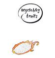 watercolor dragon fruit vector image vector image