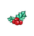 christmas berry holly or ilex isolated plant vector image