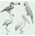 collection exotic tropical birds vector image