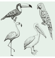 Collection of exotic tropical birds