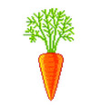pixel fresh carrot detailed isolated vector image vector image