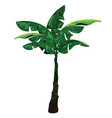 banana tree isolated on white background vector image vector image
