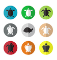 group turtle in circle vector image vector image