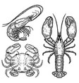 hand drawn lobster crab shrimp on white vector image vector image
