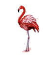 pink flamingo from a splash watercolor colored vector image vector image