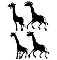 set giraffe and its silhouette vector image