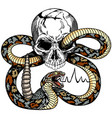 human skull and snake tattoo vector image vector image