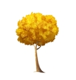 Isolated Autumn Tree vector image vector image