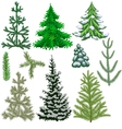 Set of fir trees and fir branches for Christmas vector image vector image