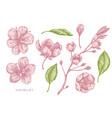 collection hand drawn pastel sakura vector image vector image