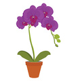 Exotic orchid flower vector image vector image