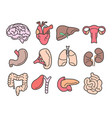 human organs isolated internal body parts anatomy vector image