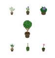 isometric plant set of fern blossom houseplant vector image