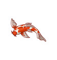 top view japanese asian koi carp goldfish vector image vector image